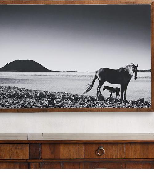Foal Framed Horse Print